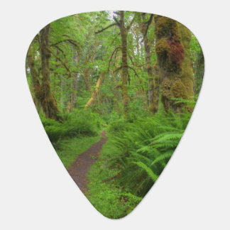 Maple Glade trail, ferns and moss covered Guitar Pick