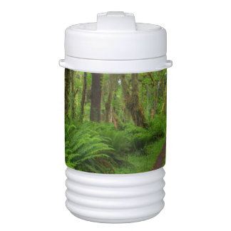 Maple Glade trail, ferns and moss covered Igloo Beverage Dispenser
