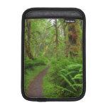 Maple Glade trail, ferns and moss covered iPad Mini Sleeve