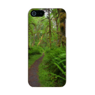 Maple Glade trail, ferns and moss covered Incipio Feather® Shine iPhone 5 Case