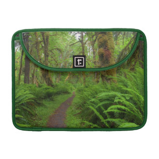 Maple Glade trail, ferns and moss covered Sleeves For MacBook Pro