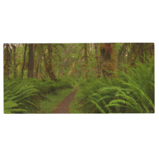 Maple Glade trail, ferns and moss covered Wood USB 2.0 Flash Drive