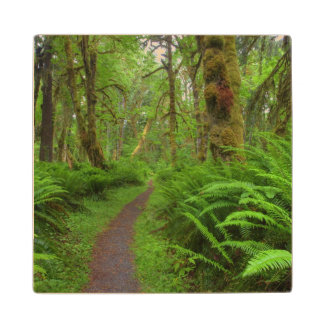 Maple Glade trail, ferns and moss covered Wood Coaster