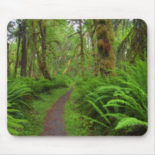 Maple Glade trail, ferns and moss covered Mouse Pad