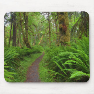 Maple Glade trail, ferns and moss covered Mouse Pads