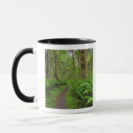 Maple Glade trail, ferns and moss covered Mug