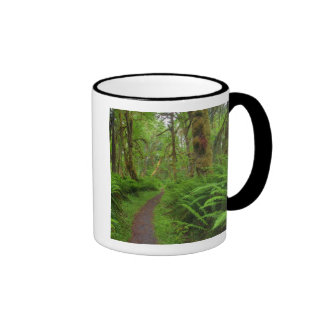Maple Glade trail, ferns and moss covered Mugs