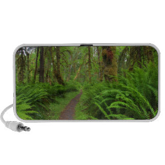 Maple Glade trail, ferns and moss covered Mp3 Speaker