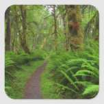 Maple Glade trail, ferns and moss covered Square Sticker