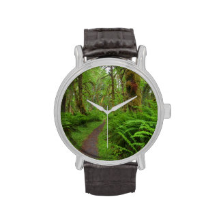 Maple Glade trail, ferns and moss covered Watches