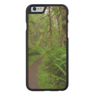 Maple Glade trail, ferns and moss covered Carved® Maple iPhone 6 Slim Case