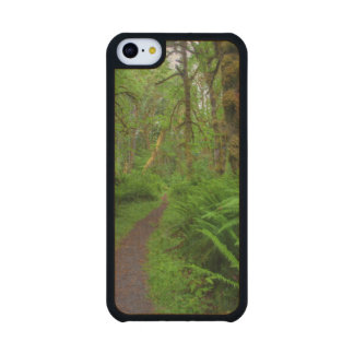 Maple Glade trail, ferns and moss covered Carved® Maple iPhone 5C Case