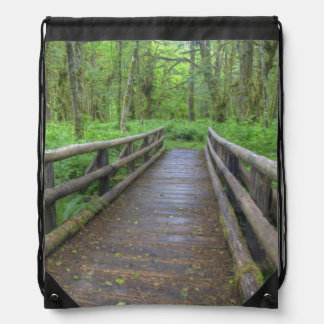 Maple Glade trail wooden bridge, ferns and Backpack