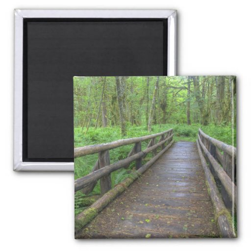 Maple Glade trail wooden bridge, ferns and 2 Inch Square Magnet