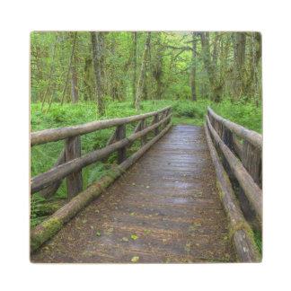 Maple Glade trail wooden bridge, ferns and Maple Wood Coaster