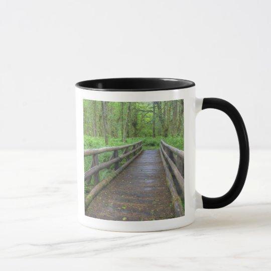 Maple Glade trail wooden bridge, ferns and Mug