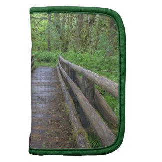 Maple Glade trail wooden bridge, ferns and Planner