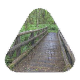 Maple Glade trail wooden bridge, ferns and Speaker