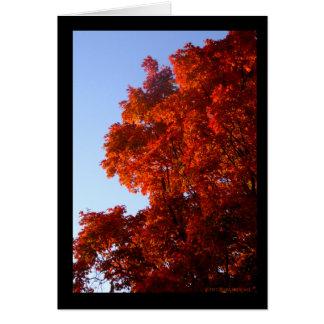 Maple in Reds & Oranges Card