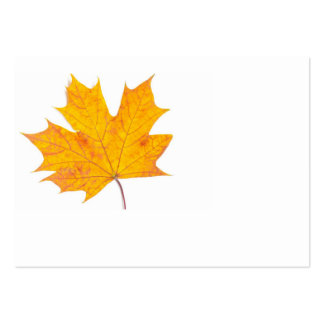 Maple leaf large business cards (Pack of 100)