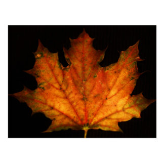 """maple leaf"" by ""Coressel Productions Postcard"