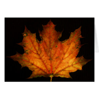 """""""maple leaf"""" by Larry Coressel Card"""