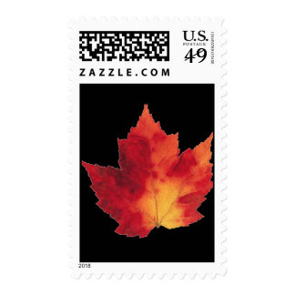 Maple Leaf for Thanksgiving Postage Stamp