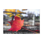 Maple Leaf Gallery Wrapped Canvas