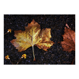 Maple Leaf In The Rain Poster
