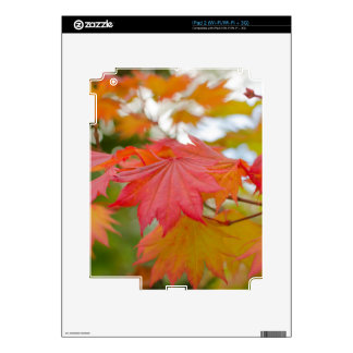 maple leaf iPad2 skin Skin For iPad 2