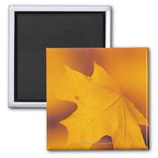 Maple leaf 2 inch square magnet
