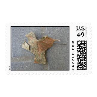 Maple leaf on pavement postage