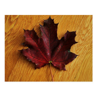 """""""maple leaf on red oak"""" by Coressel Productions Postcard"""