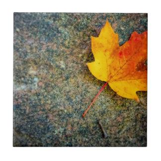 Maple Leaf on Rock Ceramic Tile