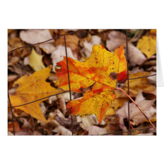 Maple Leaf On The Fence Greeting Card