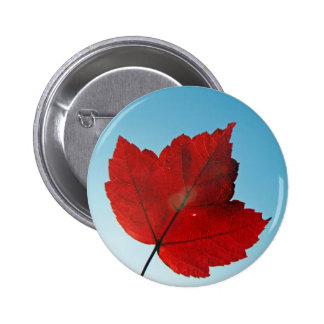 maple leaf pinback button