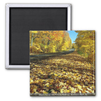 Maple leaves and Fortune Parkway Gatineau Park Q Magnets