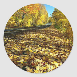 Maple leaves and Fortune Parkway, Gatineau Park, Q Round Sticker