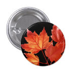 Maple Leaves Buttons