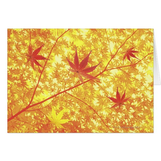 Maple leaves, close-up card