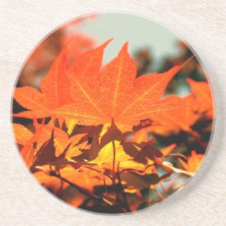 Maple Leaves Coaster