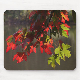 Maple Leaves in Fall Mouse Pad
