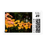 Maple leaves in fall postage stamps