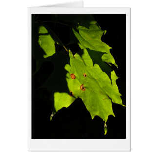 Maple leaves in the setting sun. card