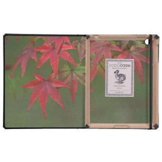 Maple Leaves, Katsura, Kyoto, Japan iPad Folio Case