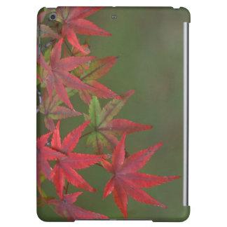 Maple Leaves, Katsura, Kyoto, Japan iPad Air Cover