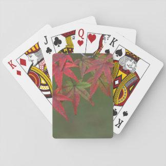 Maple Leaves, Katsura, Kyoto, Japan Playing Cards