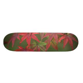 Maple Leaves, Katsura, Kyoto, Japan Skateboard Deck