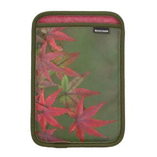 Maple Leaves, Katsura, Kyoto, Japan Sleeve For iPad Mini