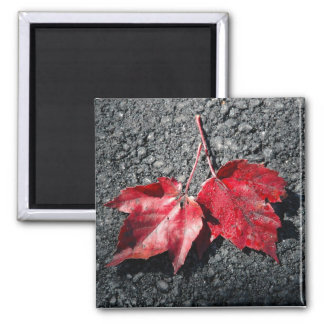 Maple leaves on the driveway magnet